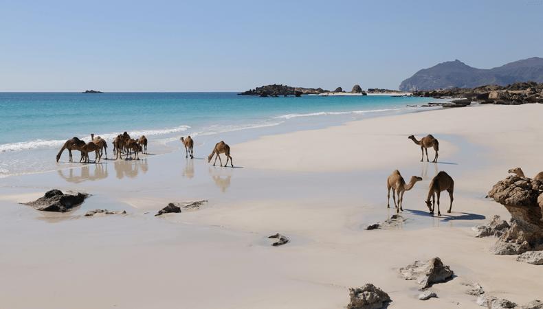 Maak tijdens je cruise naar Oman excursies aan land en bekijk de badende dromedarissen © Ministerie van Toerisme Oman/Aviareps